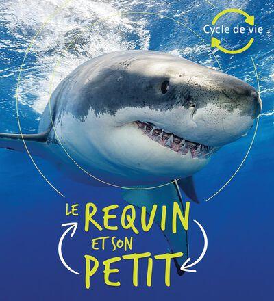 Cycle de vie : Le requin et son petit