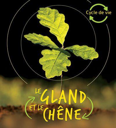Cycle de vie : Le gland et le chêne