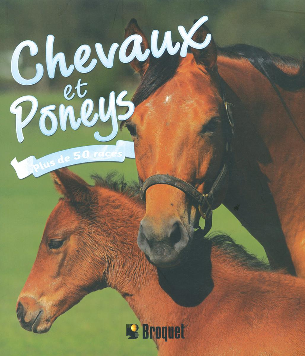 Chevaux et poneys