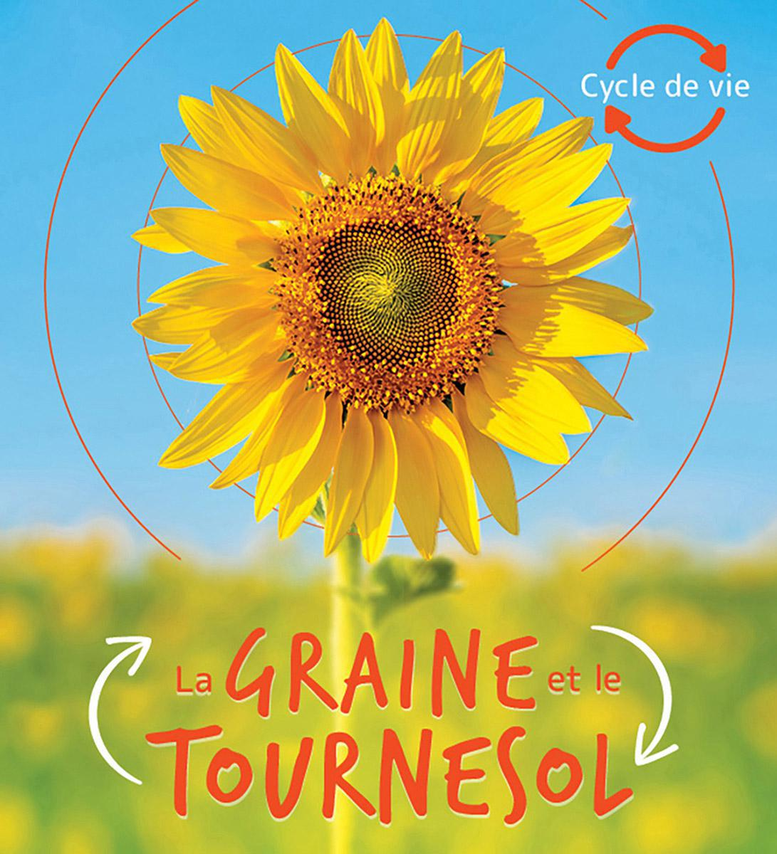 Cycle de vie : La graine et le tournesol