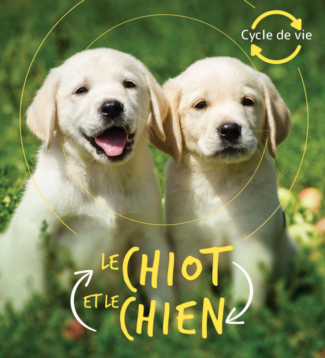 Cycle de vie : Le chiot et le chien