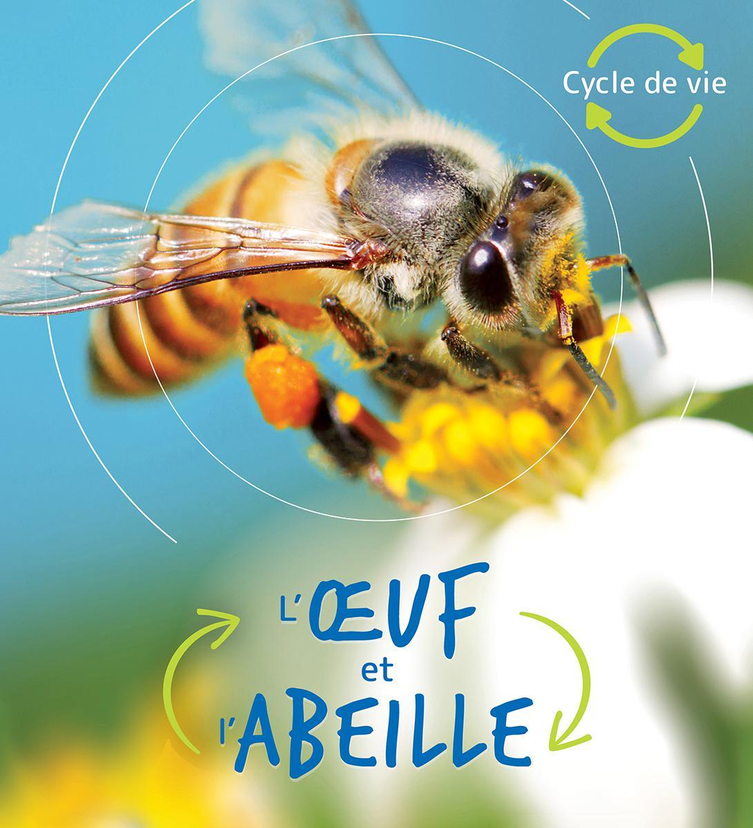 Cycle de vie : L'oeuf et l'abeille