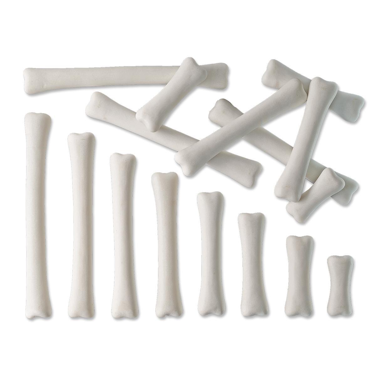 Dinosaur Bones Match and Measure Set