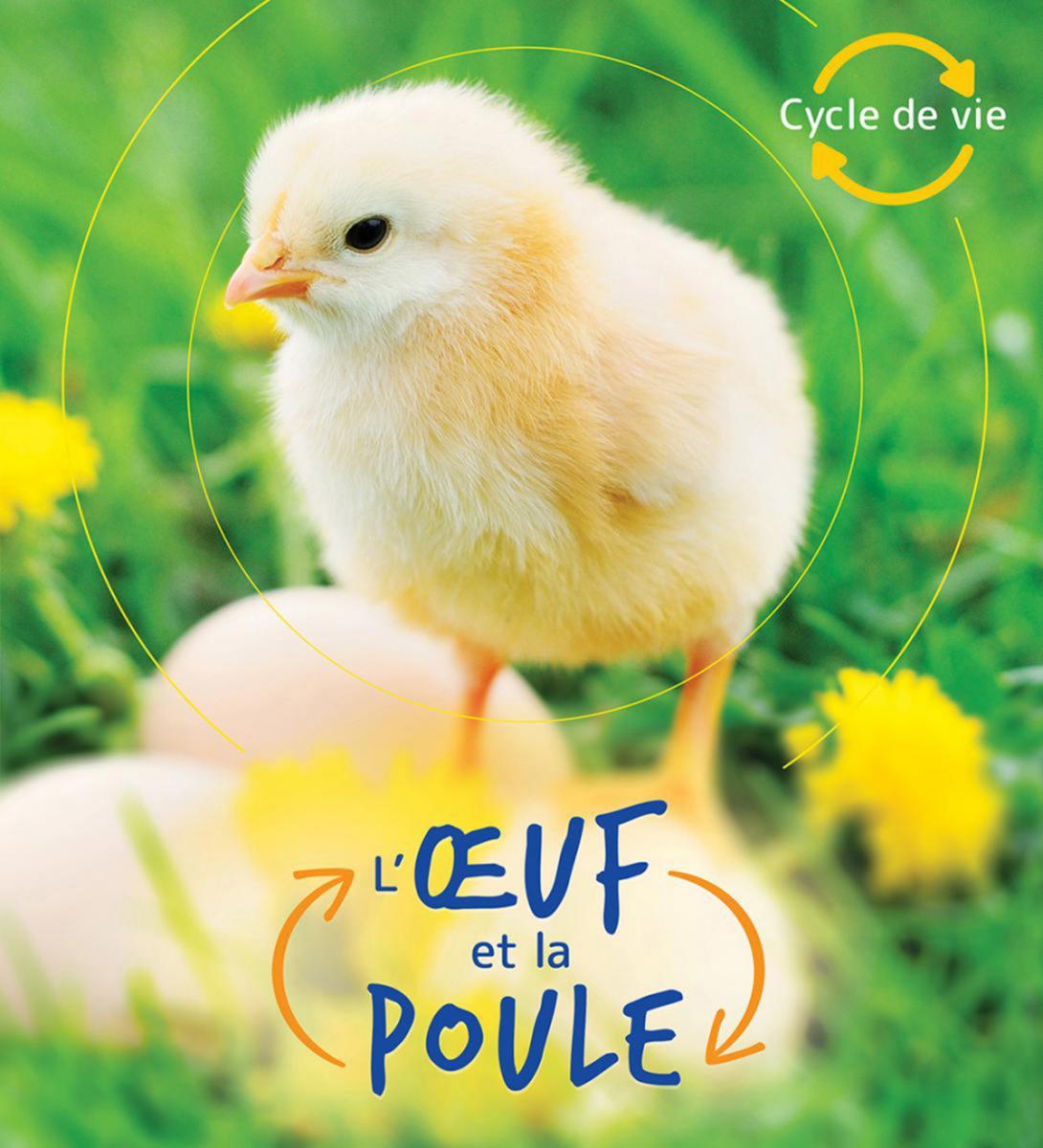 Cycle de vie : L'oeuf et la poule