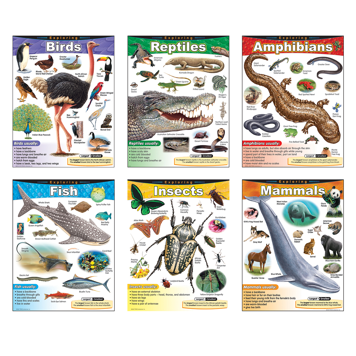 Exploring Species Chart Pack